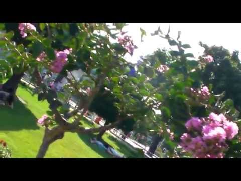 (1240)The Blue Mosque (Sultanahmet Camii) in Istanbul, Turkey 2 with BGM