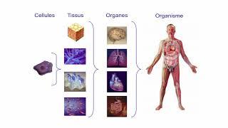 Alimentation et cancer : mythe ou réalité ?