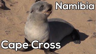 Duizenden pelsrobben bij Cape Cross - Safari in Namibië & Botswana