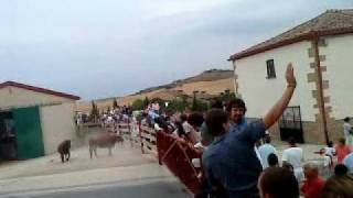 Vaca fiestas Mendigorria 2010