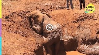 ЛЮДИ СПАСАЮТ ПОПАВШИХ В ЗАПАДНЮ ЖИВОТНЫХ . PEOPLE SAVE FOR WESTERN ANIMALS