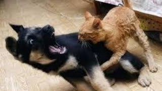 Cute and Funny Animals Compilation #6[Try Not To Laugh]-Funny Dog-Cute Cat Videos