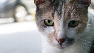 Город кошек — Русский трейлер