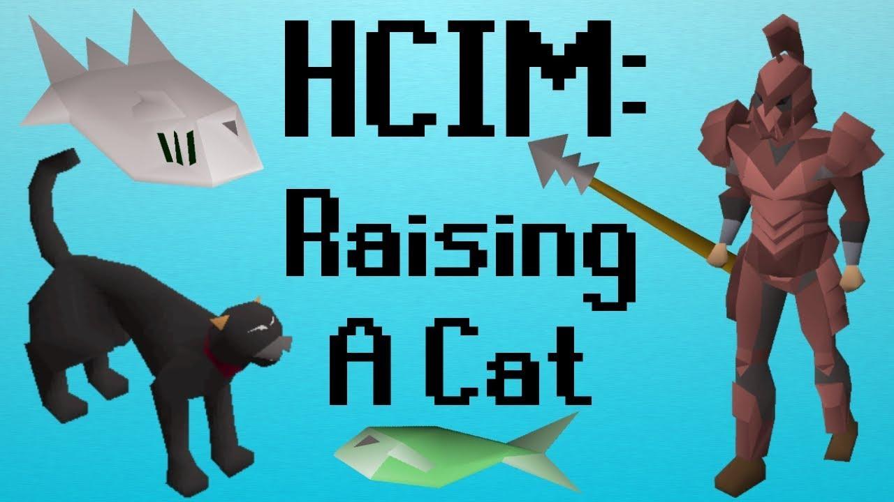 Osrs Hcim 5 Raising A Cat 709 2277 Youtube