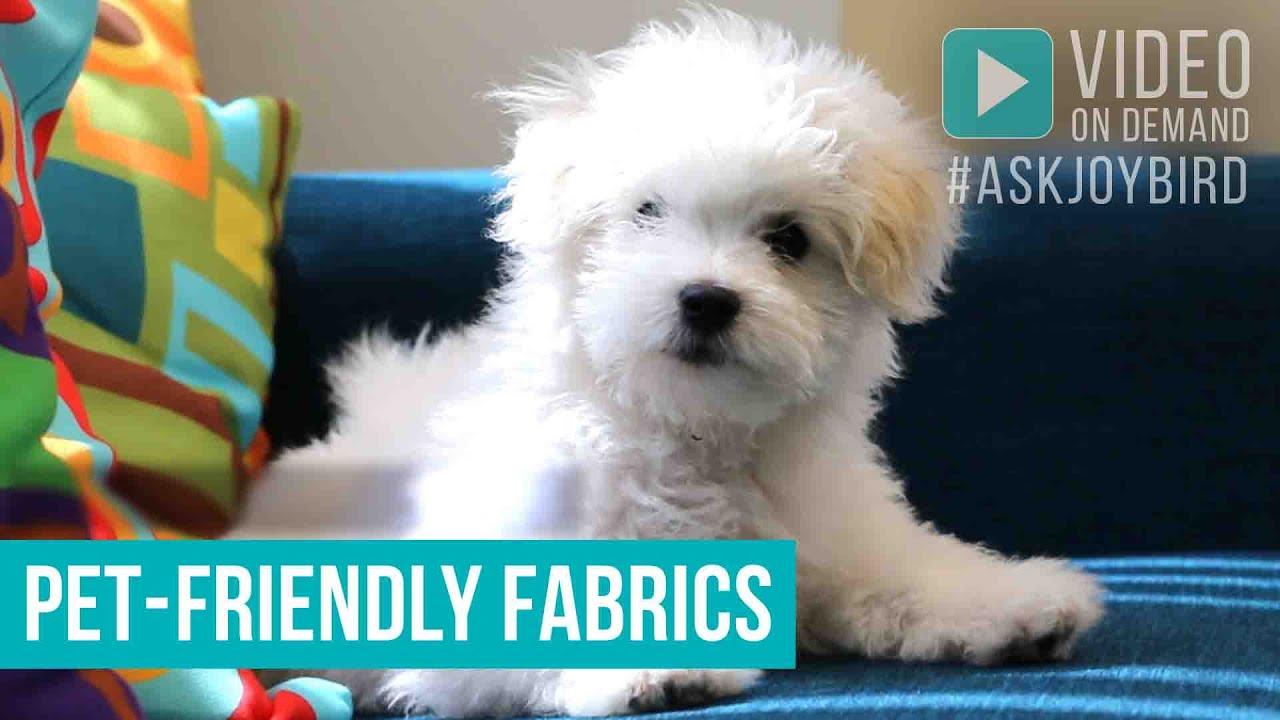Our Pet Friendly Fabrics By Joybird Furniture