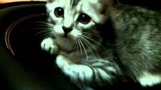 кошка и сабвуфер