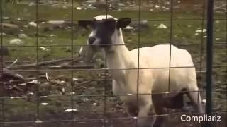 Самые смешные, улетные и прикольные животные Смешно до слез Очень смешные ролики #2 4
