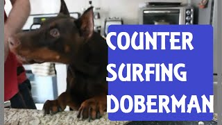 Counter Surfing Doberman Pinscher And Toddler Get Ready For A Bbq | Bad Guilty Dog Steal Food Funny