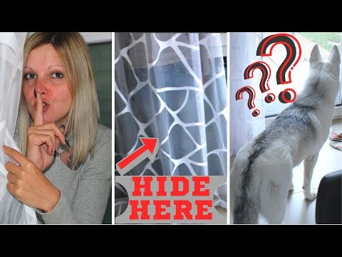 My Dog Gets Bamboozled When i Hide! [Best reaction ever]