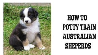 How To Quickly House Train Australian Shepherds