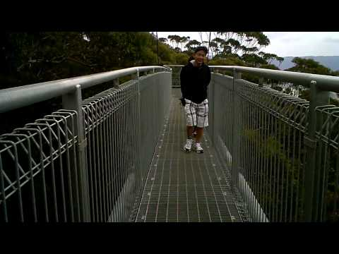 Australia - Illawarra Fly Treetop Walk