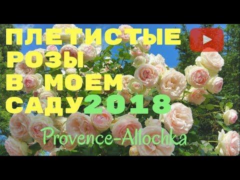 ФРАНЦИЯ/ПРОВАНС/ПЛЕТИСТЫЕ РОЗЫ/Мой САД 2018/VLOG provence-allochka