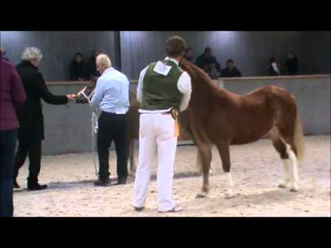 Welsh Youngstock Winter Show