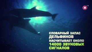 Дельфины Документальный фильм