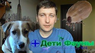 Клещи у собак. Клещи профилактика. Советы ветеринара(, 2016-03-31T18:23:08.000Z)