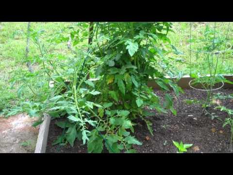 South Carolina Vegetable Garden