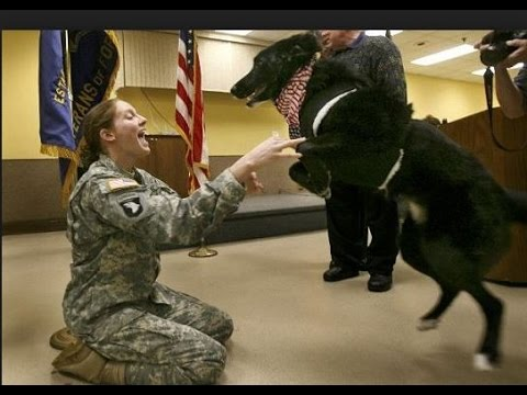 Dogs Welcoming Soldiers Home Compilation 2015 – Funny Dog Videos, Funny Dogs, Funny Animals