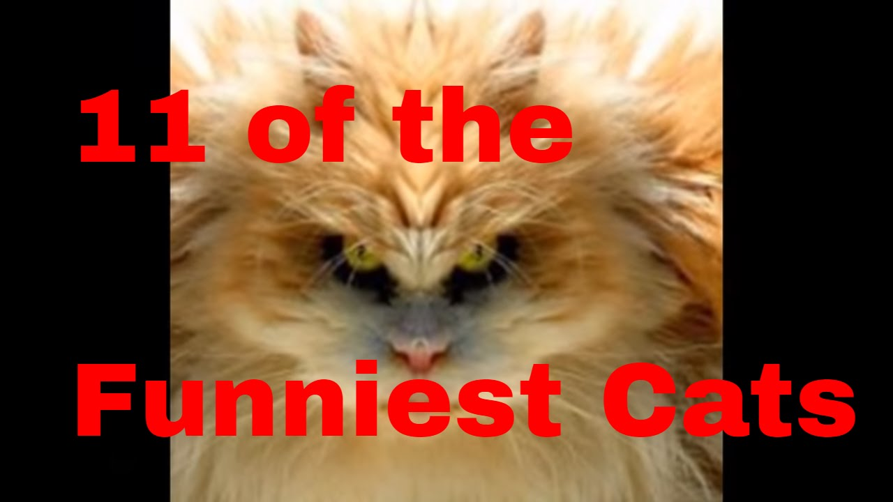 Top 11 Funny Looking Cats
