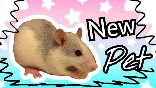 VLOG: Едем покупать крысу | Going to buy ret | New pet