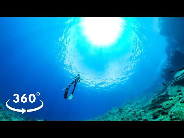 360° VR Experience Underwater Dentex |Spearfishing Life 🇬🇷