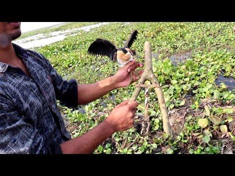 Bird Trap Technology-How To Catch Birds Using Awesome Quick Bird Traps//Make bird trap & catch bird.