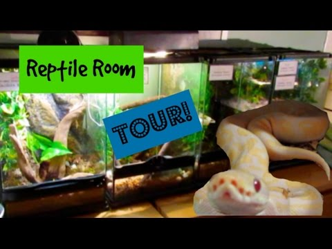 JANUARY 2017 REPTILE ROOM TOUR! 30 REPTILES!