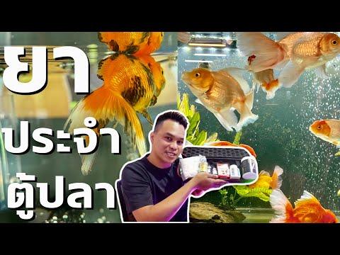 ยาประจำตู้ปลา ครบจบ ทุกอาการ l ฮัลโหล พาเพลิน EP.24