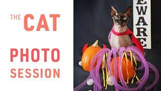 Sphynx Cat Halloween Photo Session