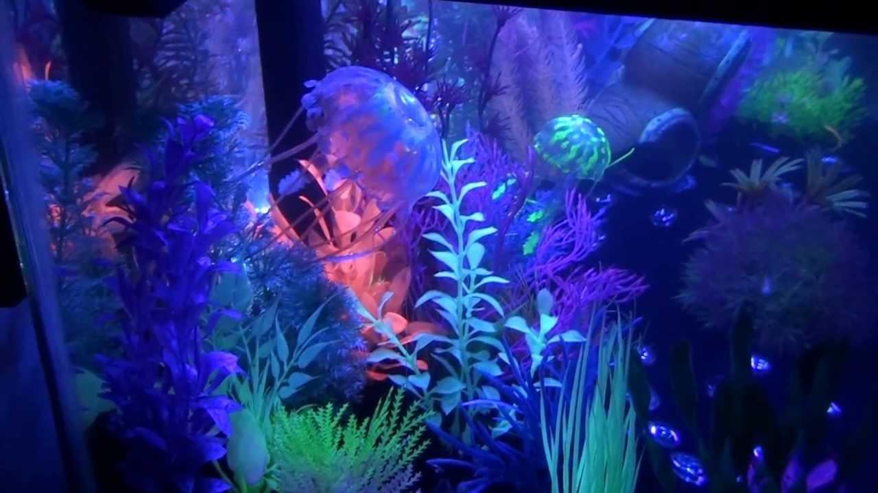20 gallon long glofish tank youtube