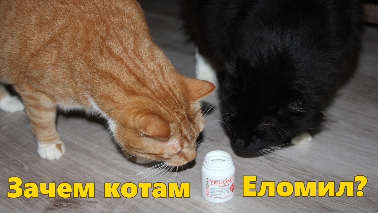 Картинки котика зачем
