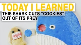 TIL  How Cookiecutter Sharks Eat Is Terrifying (Explained With Cookies) | Today I Learned