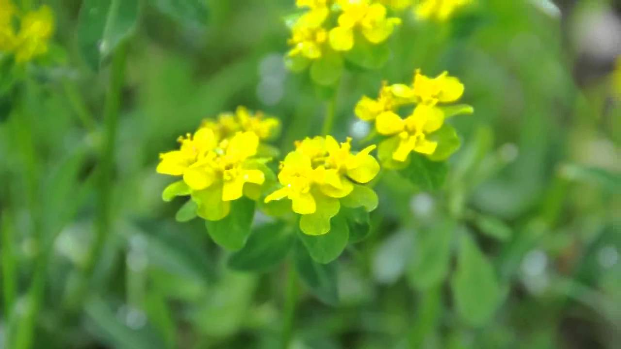 Yellow Flowers And Grass Youtube