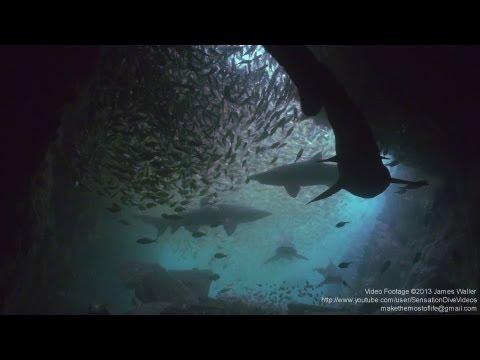Living Colours - Scuba Diving Best Of Underwater Video In Indonesia Australia Thailand Fiji