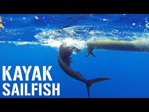 Kayak Fishing: 6-FOOT SAILFISH, Kingfish and Big Sharks