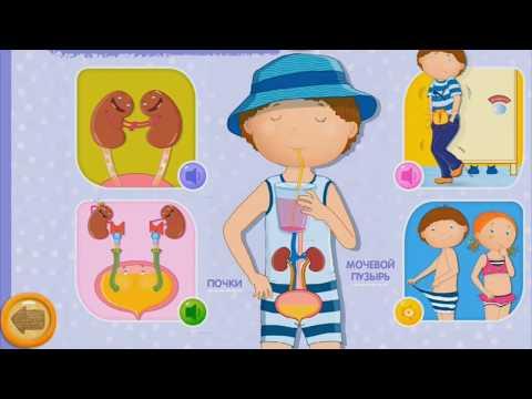 Строение человека. Анатомия человека. Обучающий мультик для детей
