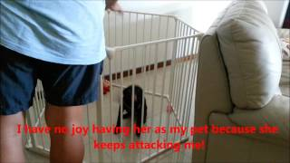 Dog training Singapore - Adopting from shelter house or purchase from pet shop?