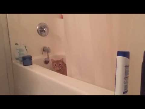 puss the Manx in the shower