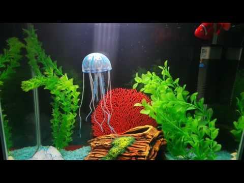 Посылка для аквариума - медуза для аквариума.