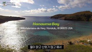 ? 하와이 여행 하나우마 베이 스노클링 | 백종원 맛집…