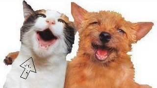 Hund und Katze singen Lied! Voll süß!!! Hört euch das an!