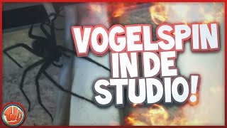 VOGELSPIN IN STUDIO!