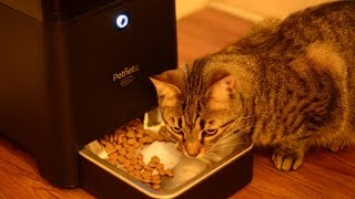 Petnet Beta SmartFeeder Automated Smart Home Pet Feeder - [Review]