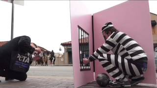 """PETA protests Hallmark Cards' use of chimpanzees in greeting cards with imprisoned """"chimp"""""""
