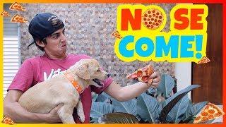 Daniel El Travieso - Todos Los Perros Del Mundo Hacen Esto!