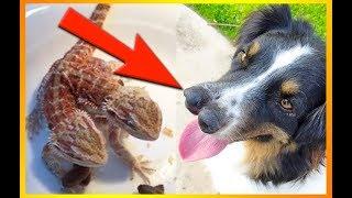 12 Meget Specielle Dyre-mutationer!