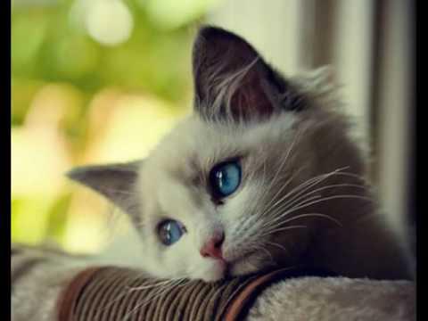 Картинки по запросу котик