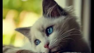 "Песня ""мой котик котик котик"""