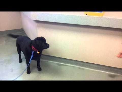 caesar-the-dog-catches-treats