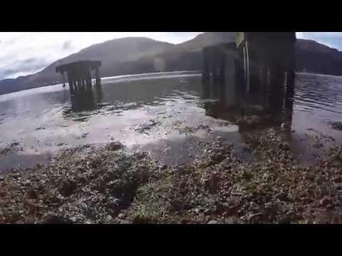Scuba diving Twin Pier 250415
