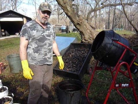 Dehusking Black Walnuts with a Cement Mixer Meadowlily Farm